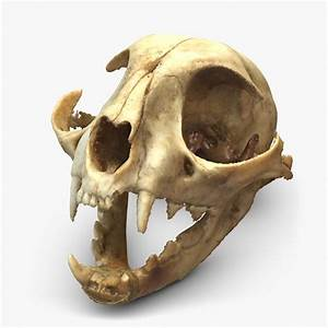 cat skull - Google Search | Art Reference - Cats ...