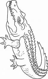 Crocodile Coloring Pages Animals Crocodiles Animal Outline Drawing Alligators Sheets Getdrawings Town sketch template