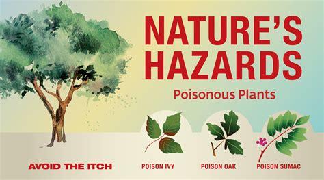Natures Hazards Poisonous Plants Wright Patterson Air