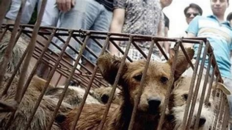 dog meat  easy  buy  officials deny ban