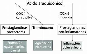Metabolismo Del  U00e1cido Araquid U00f3nico Y Acci U00f3n Farmacol U00f3gica De Los