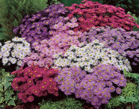 shaped bed 17 stunning plants that bloom all summer remodeling