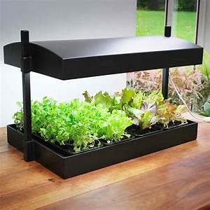 Serre Pour Plante : serre pour plantes d interieur l 39 atelier des fleurs ~ Premium-room.com Idées de Décoration