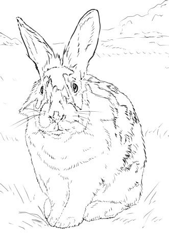 disegni  bianco  nero da colorare  disegno  uovo