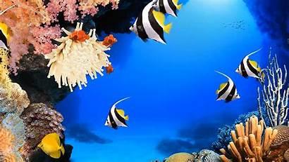 Aquarium Rainwallpaper
