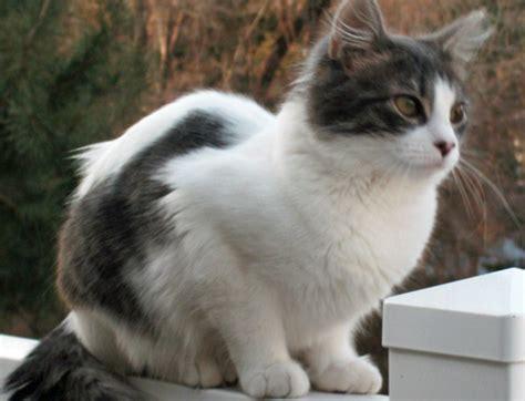 lost pet gypsy missing