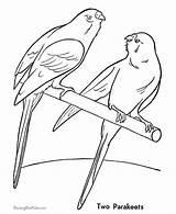 Parakeet Coloring Pintar Colorir Animais Desenhos Ausmalbilder Periquitos Birds Bird Pet Domesticos Haustiere Papagei Desenho Coloridos Malvorlagen Ausmalbild Konabeun Colorear sketch template