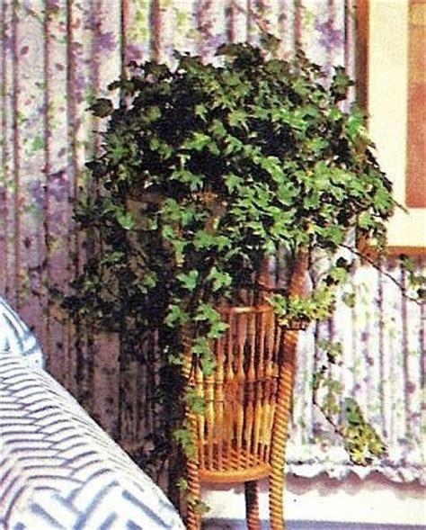 Klettergerüst Zum Stecken by Zimmer Und Gartenblumen