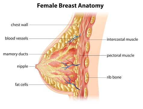 Breast Cancer The Symptoms Dr Drai Americas Obgyn