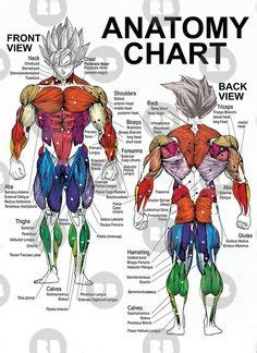 This is a table of skeletal muscles of the human anatomy. Major muscles of the body, with their COMMON names and SCIENTIFIC (Latin) names YOUR JOB is to ...