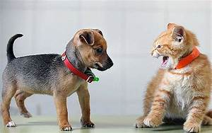 It's finally proven - scientists test whether cats or dogs ...