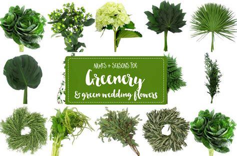 essential guide  greenery  weddings green
