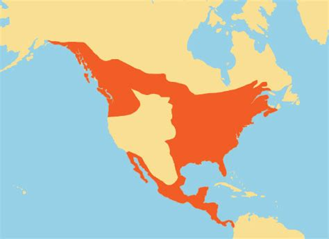image gallery ocelot range map