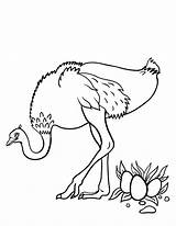 Ostrich Coloring Printable Coloringcafe Sheet Ostriches Animal Animals Pdf Related Adult Draw Birds Sheets German Coloring2print sketch template