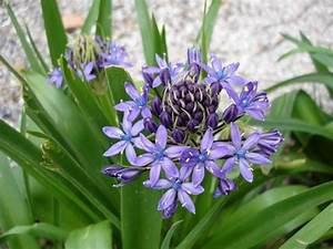 baptisia australis ou lupin indigo une plante facile a With photo jardin avec palmier 10 biophytum sensitivum une jolie plante sensitive