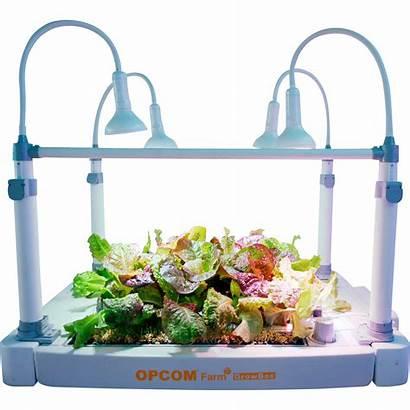 Grow Hydroponic Box Tabletop Opcom Hydroponics Indoor