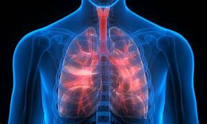 The Effect Weed Has On Your Lungs
