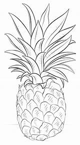 Coloring Pineapple sketch template