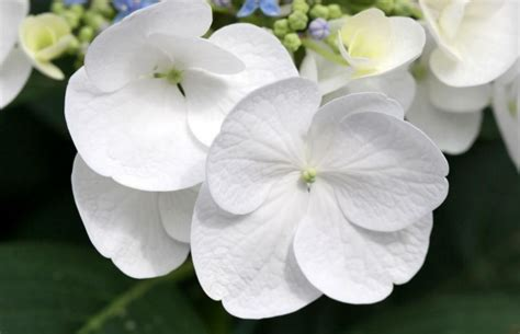white flower pictures photo of white flowers garden png 1 comment hi res 720p hd
