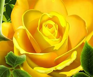 Yellow Flower Android Wallpapers 960x800 Mobile Phone Images