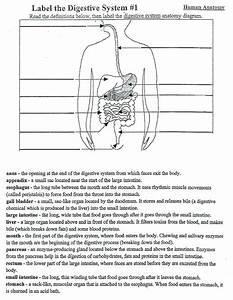 5th Grade Digestive System Diagram