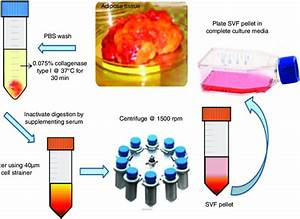 Solation Of Mesenchymal Stem Cells From Adipose Tissue