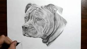 Pencil Drawings Of Pitbulls - Drawing Sketch Galery