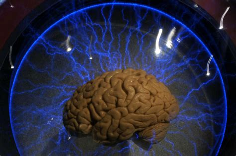 the simple test that can determine whether you have a male or female brain indy100