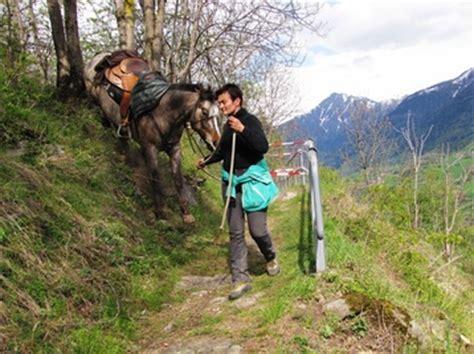 Pferd Soll Zunehmen