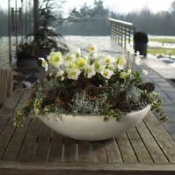 coffee table decorations bloom 39 s winterliche dekoideen mit blumen und pflanzen