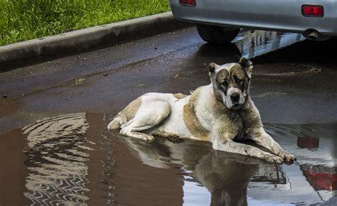 Rīgā spēcīgā lietus dēļ ielas pārvēršas upēs; spēkā ...