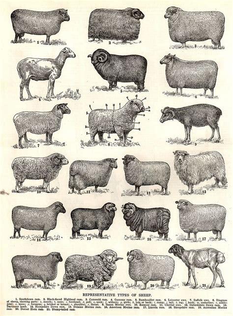 cricut svg sheep images  pinterest sheep
