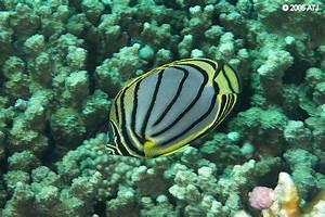 ATJ's Marine Aquarium Site - Reference - Organisms to Avoid