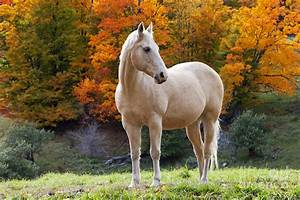 White Horse In Autumn Photograph by Brian Jannsen