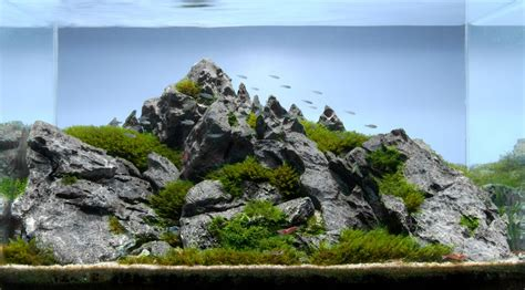 Iwagumi Aquascape by Iwagumi Style Aquascape Aquariumbros
