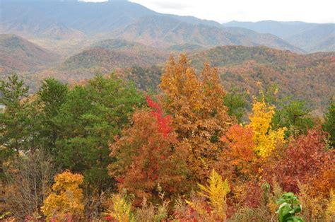 smoky mountain fall colors great smoky mountains fall foliage report 2016