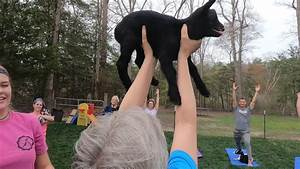 Goat Yoga! WBOC Sports' Jose Cuevas takes a Look at the ...