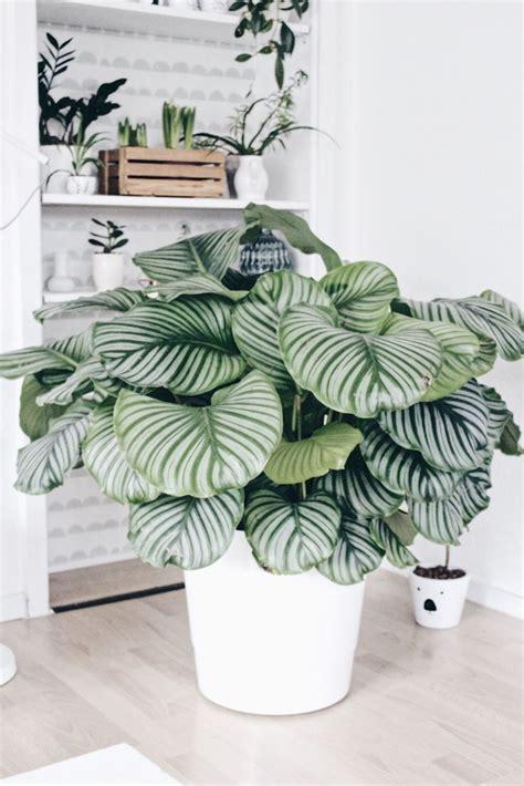 Wohnzimmer Pflanze Groß by Die Besten 25 Wohnzimmer Pflanzen Ideen Auf