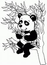 Panda Coloring Bamboo Tree Album Coloriage Template Coloriages Animaux Face Bear Popular sketch template