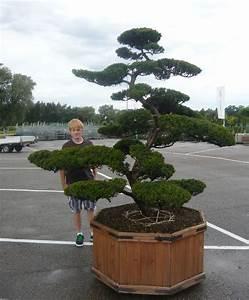 pflanzenspecial gartenbonsai kostbarkeiten japans With garten planen mit bonsai shop de