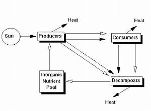 Environmental Biology Sequence