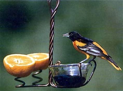 Oriole Feeder Grape Jelly by The Of Interesting Facts Spend Your Lunch