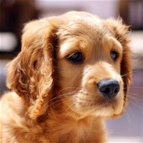 kommandos fuer hunde welpen trainieren futalisde