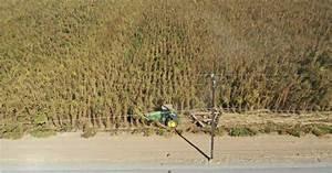 10 Million  U0026quot Marijuana U0026quot  Plants Destroyed