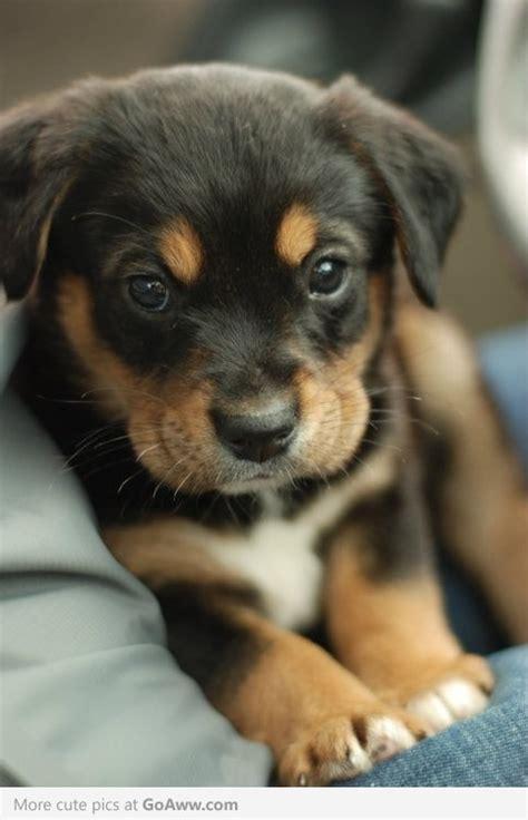 Too Cute Puppy Love Pinterest