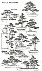 The Ancient Art Of Bonsai  Styles Of Bonsai Trees