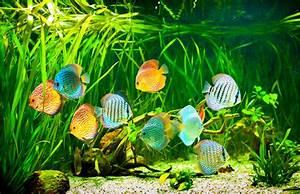 Fische Für Anfänger : aquarium und fische f r anf nger tiermagazin ~ Orissabook.com Haus und Dekorationen
