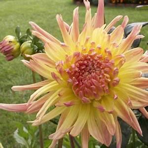 Planter Des Bulbes : planter des bulbes en mars l 39 atelier des fleurs ~ Dallasstarsshop.com Idées de Décoration