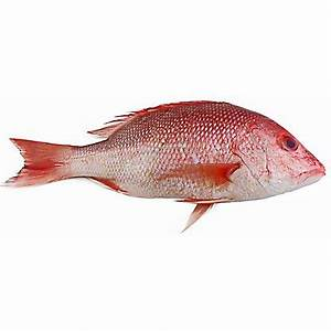 Fresh Whole American Red Snapper, LB – Central Market