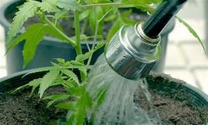 Pflanzen Bewässern Urlaub : so berleben die pflanzen wenn sie urlaub machen praktische tipps zur bew sserung ~ Frokenaadalensverden.com Haus und Dekorationen